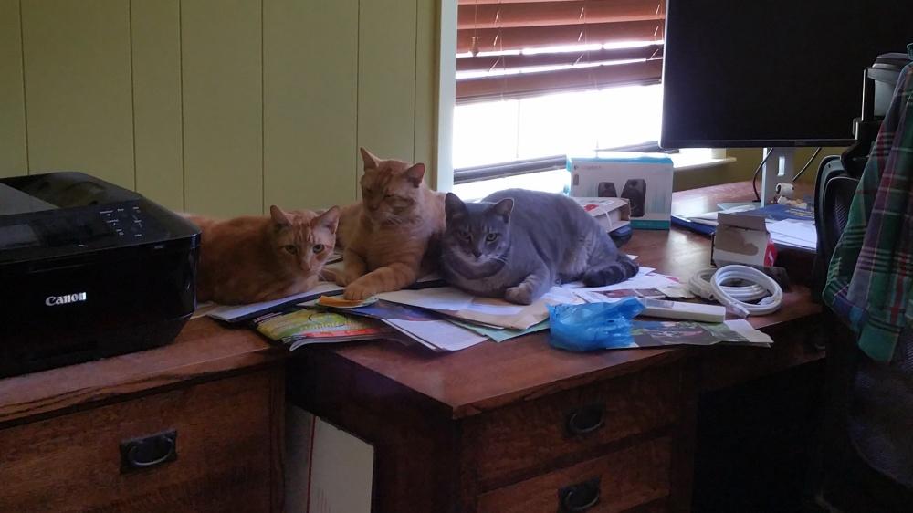 office kitties