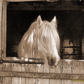 Portrait of a Horse - Comparison