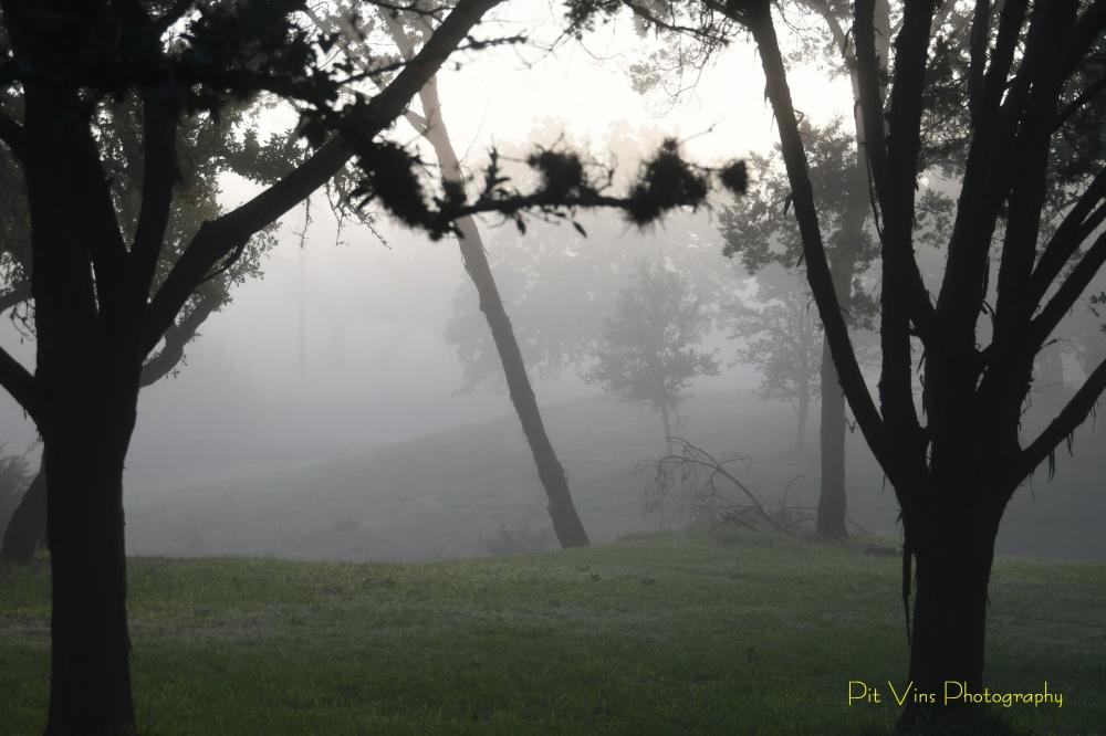 creekside misty Morning