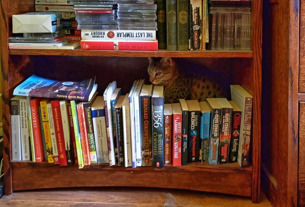 Savannah in bookshelf
