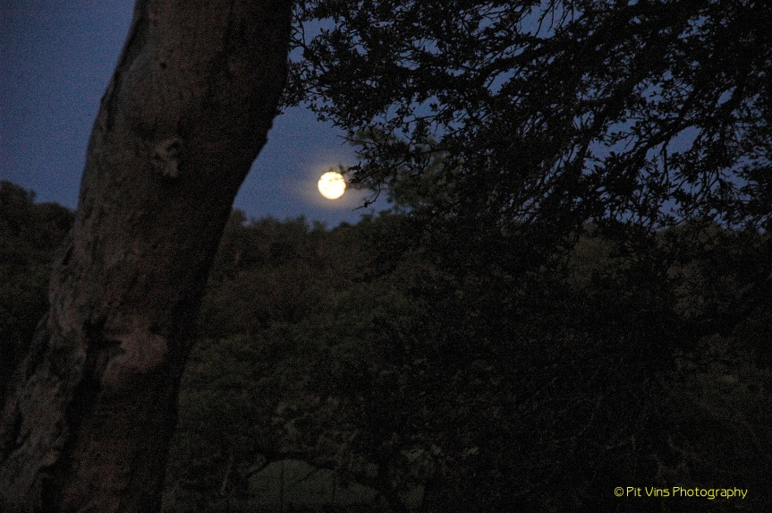 Comanche Moon over the Texas Hill Country